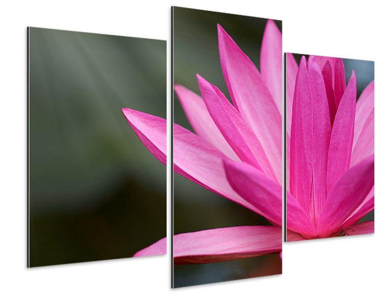 Aluminiumbild 3-teilig modern XXL Seerose in Pink
