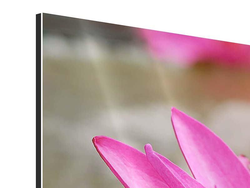 Aluminiumbild 3-teilig modern Sonnige Seerose