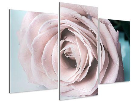 Aluminiumbild 3-teilig modern Pastellrose