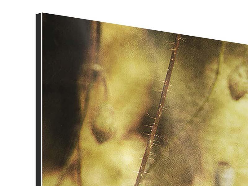 Aluminiumbild 3-teilig modern Der wilde Mohn