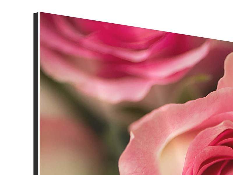 Aluminiumbild 3-teilig modern Rosenliebe