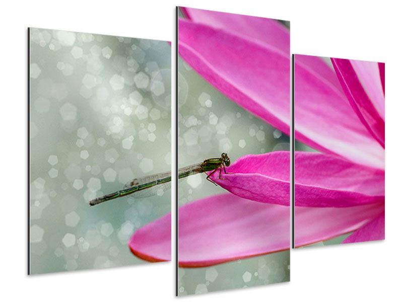 Aluminiumbild 3-teilig modern Libelle auf dem Seerosenblatt