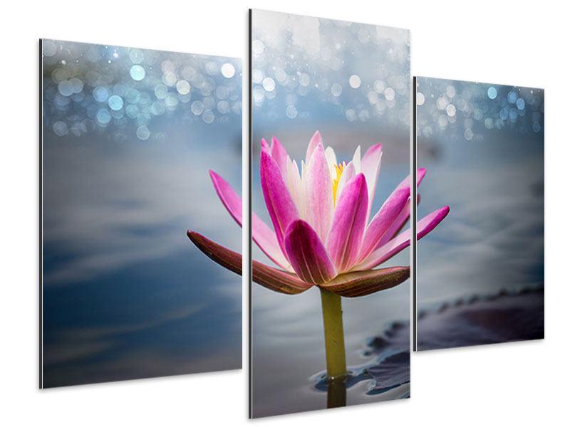 Aluminiumbild 3-teilig modern Lotus im Morgentau