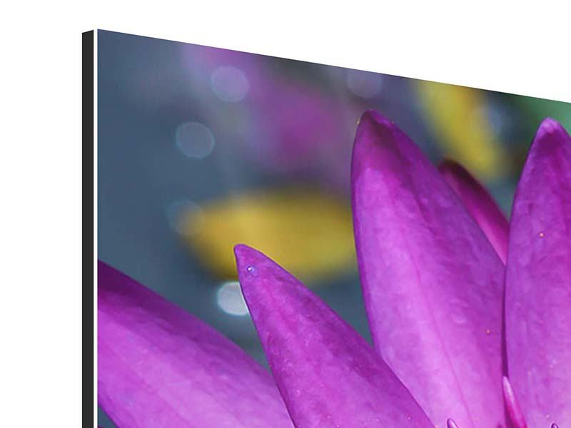 Aluminiumbild 3-teilig modern Makro Seerose in Lila