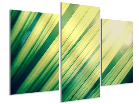Aluminiumbild 3-teilig modern Beleuchtetes Palmblatt
