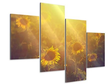 Aluminiumbild 4-teilig modern Sonnenblumen im goldenen Licht