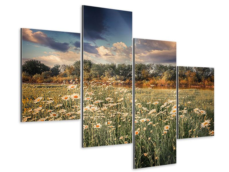 Aluminiumbild 4-teilig modern Die Wiesenmargerite am Fluss