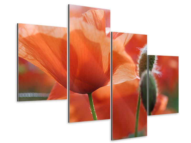 Aluminiumbild 4-teilig modern Klatschmohn XXL