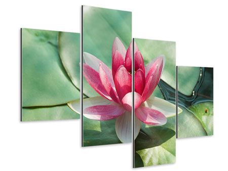 Aluminiumbild 4-teilig modern Der Frosch und das Lotusblatt
