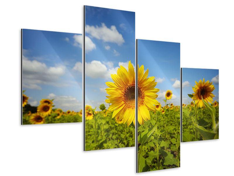 aluminiumbild 4 teilig modern sommer sonnenblumen. Black Bedroom Furniture Sets. Home Design Ideas
