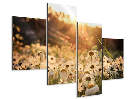 Aluminiumbild 4-teilig modern Gänseblümchen bei Sonnenuntergang