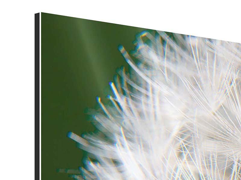 Aluminiumbild 4-teilig modern Riesenlöwenzahn