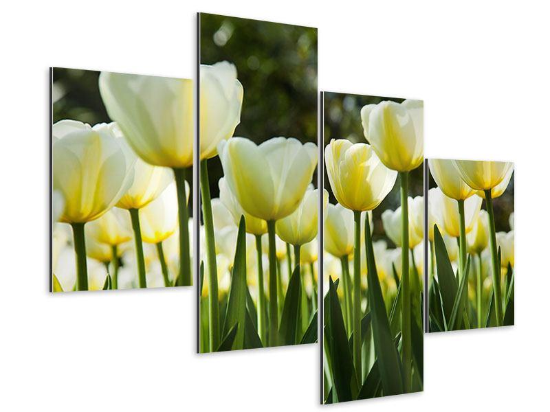 Aluminiumbild 4-teilig modern Tulpen bei Sonnenuntergang