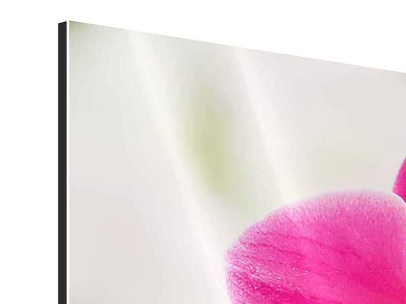 Aluminiumbild 4-teilig modern Perspektivische Orchideen