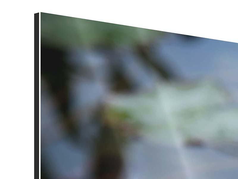 Aluminiumbild 4-teilig modern Das Seerosenduo