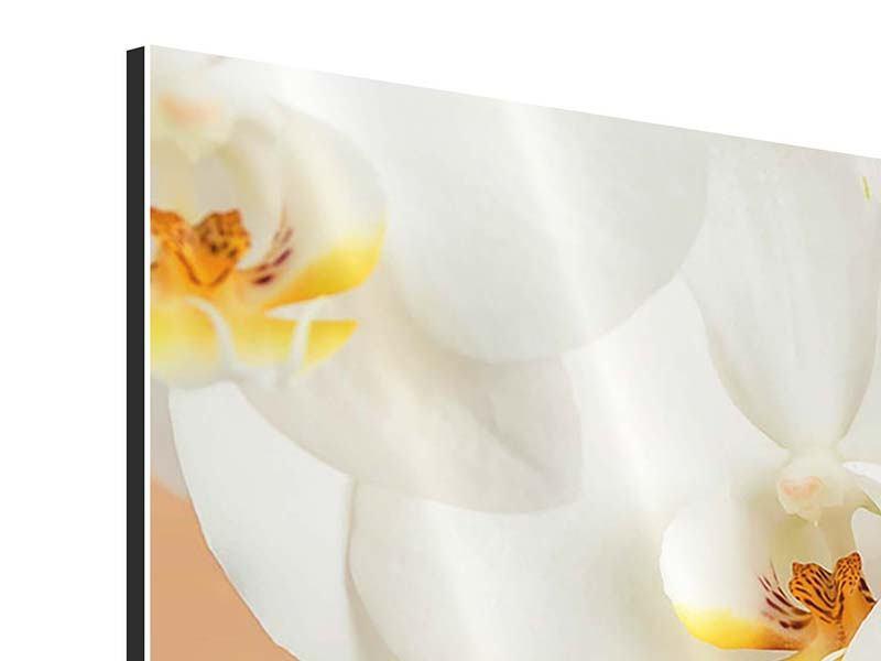Aluminiumbild 4-teilig modern Weisse Orchideenblüten