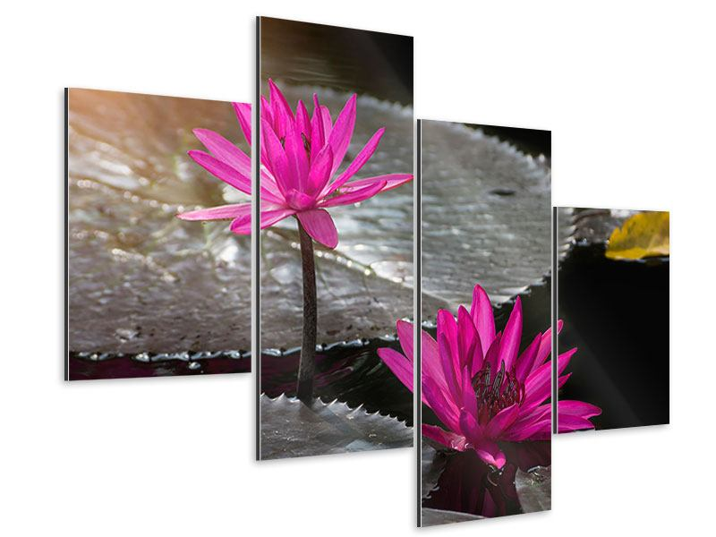 Aluminiumbild 4-teilig modern Seerosen im Morgentau
