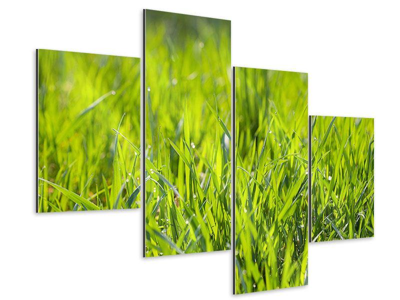 Aluminiumbild 4-teilig modern Gras im Morgentau