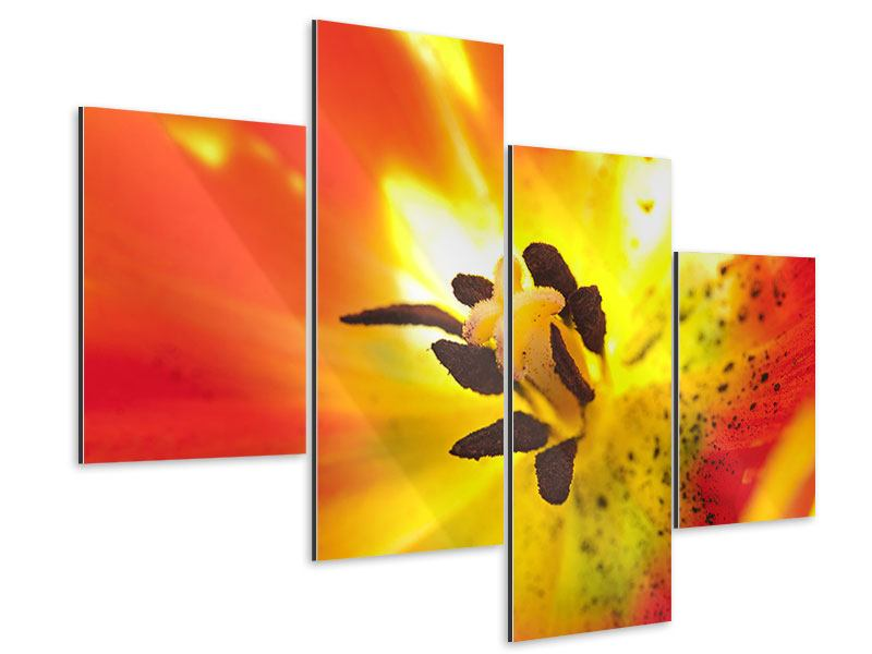 Aluminiumbild 4-teilig modern Die Narbe einer Tulpe XXL