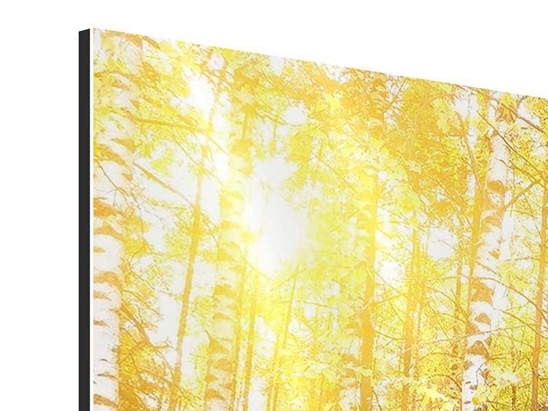 Aluminiumbild 4-teilig modern Birkenwald