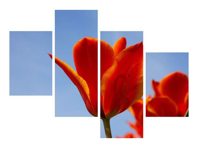 Aluminiumbild 4-teilig modern Rote Tulpen in XXL
