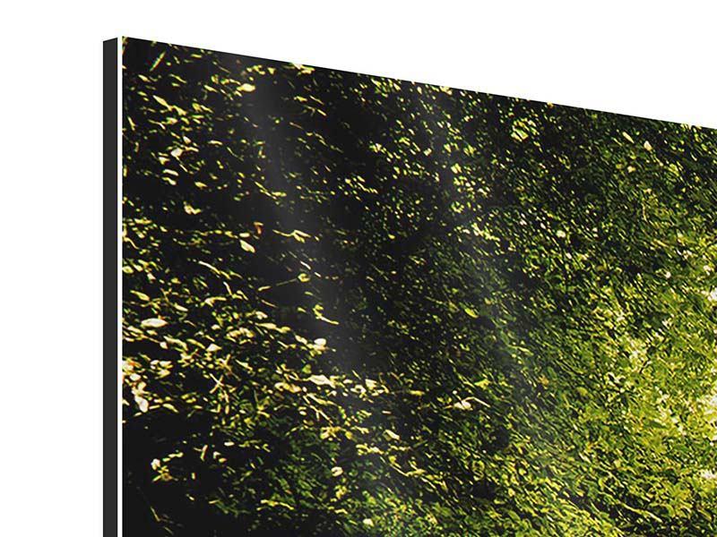 Aluminiumbild 4-teilig modern Der bemooste Weg