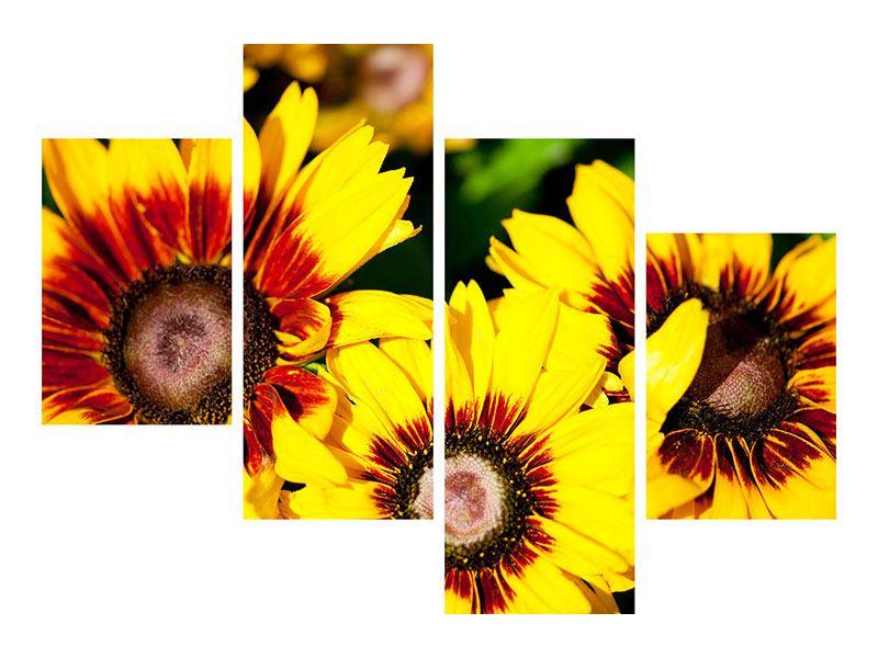 Aluminiumbild 4-teilig modern Reife Sonnenblumen
