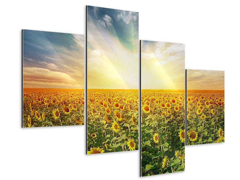 Aluminiumbild 4-teilig modern Ein Feld voller Sonnenblumen