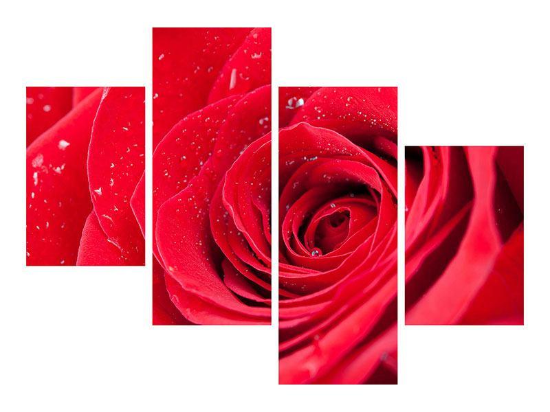 Aluminiumbild 4-teilig modern Rote Rose im Morgentau