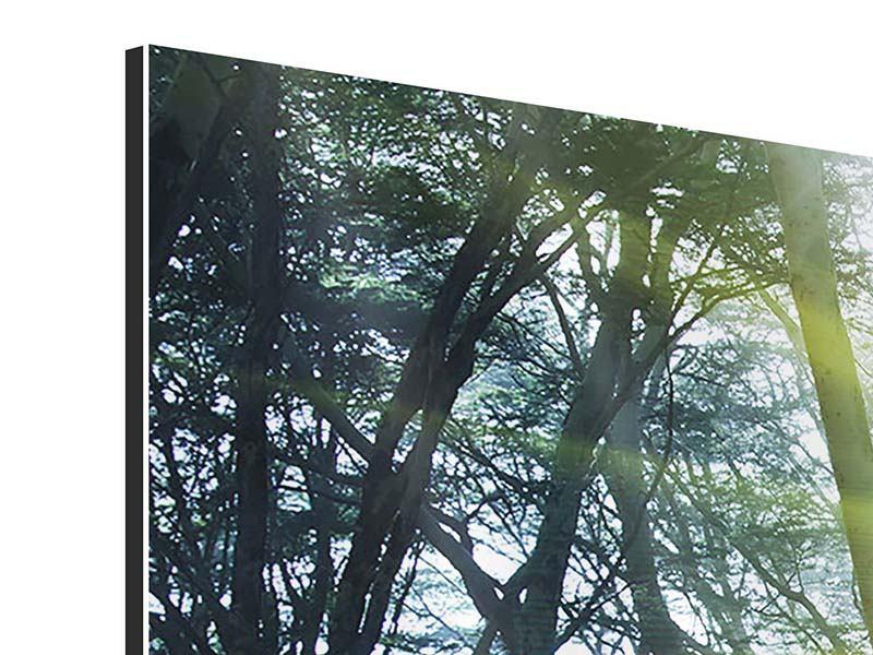 Aluminiumbild 4-teilig modern Sonnenstrahlen im Wald