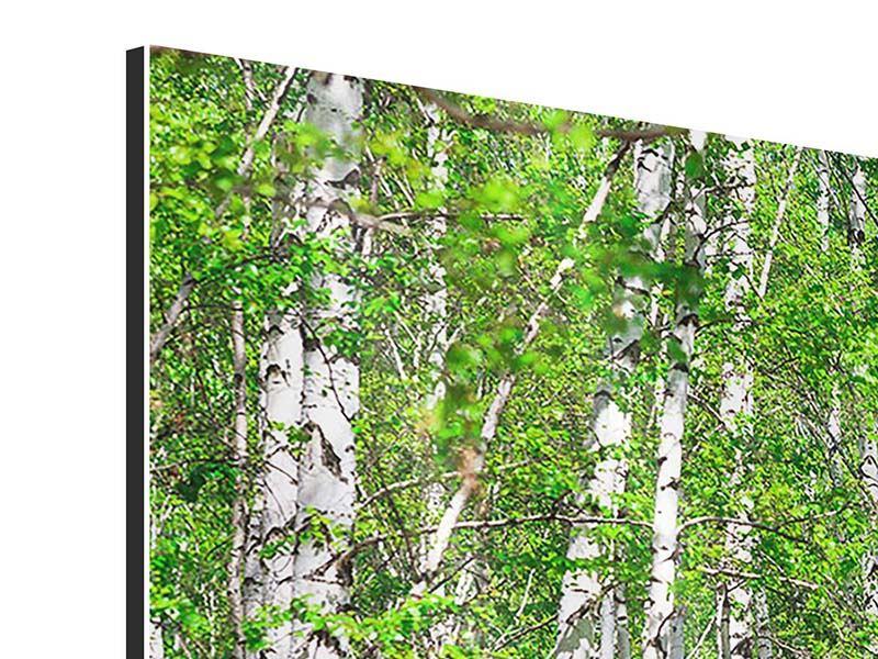 Aluminiumbild 4-teilig modern Der Birkenwald