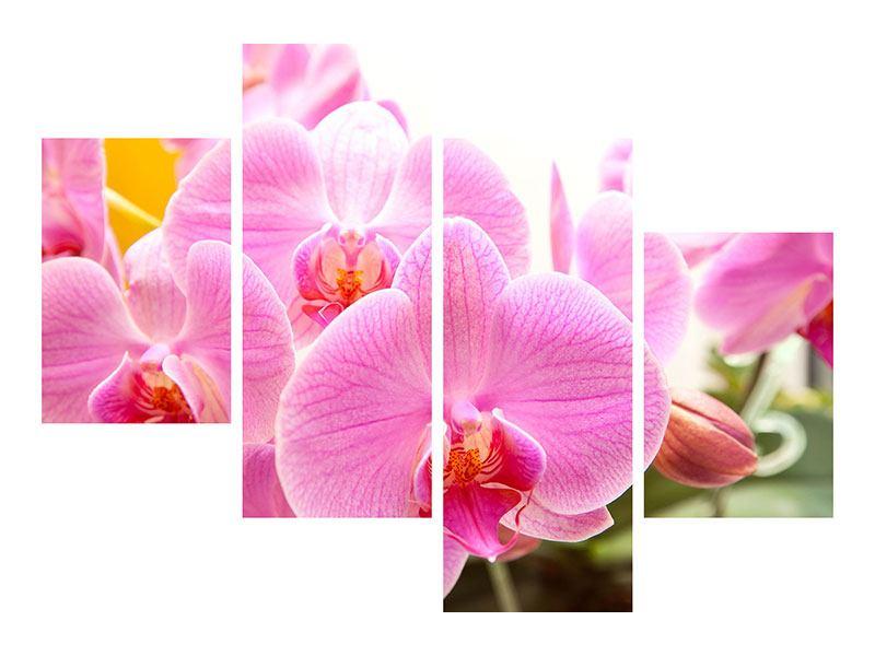 Aluminiumbild 4-teilig modern Königliche Orchideen