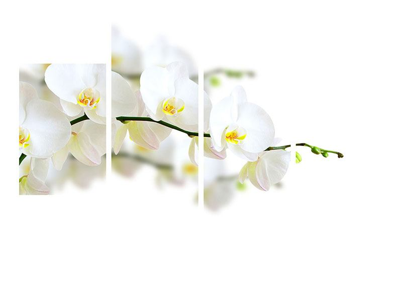Aluminiumbild 4-teilig modern Weisse Orchideen