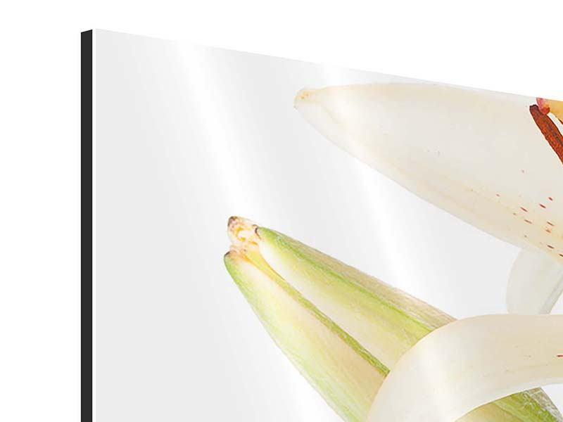 Aluminiumbild 4-teilig modern Weisser Lilienstrauch
