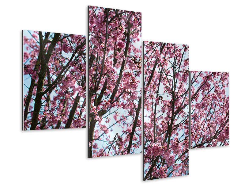 Aluminiumbild 4-teilig modern Japanische Blütenkirsche