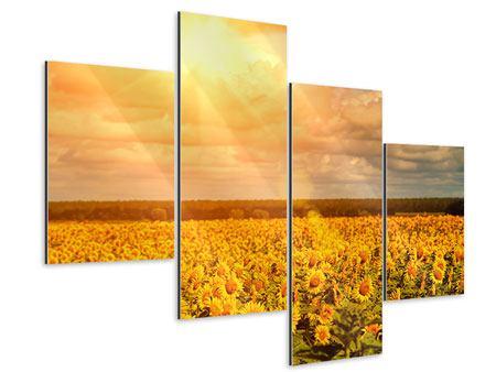 Aluminiumbild 4-teilig modern Goldenes Licht für Sonnenblumen