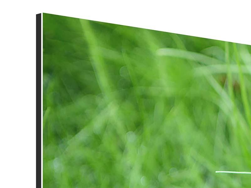 Aluminiumbild 4-teilig modern Grashalme