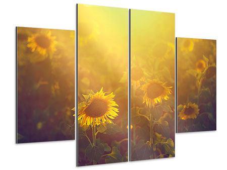 Aluminiumbild 4-teilig Sonnenblumen im goldenen Licht