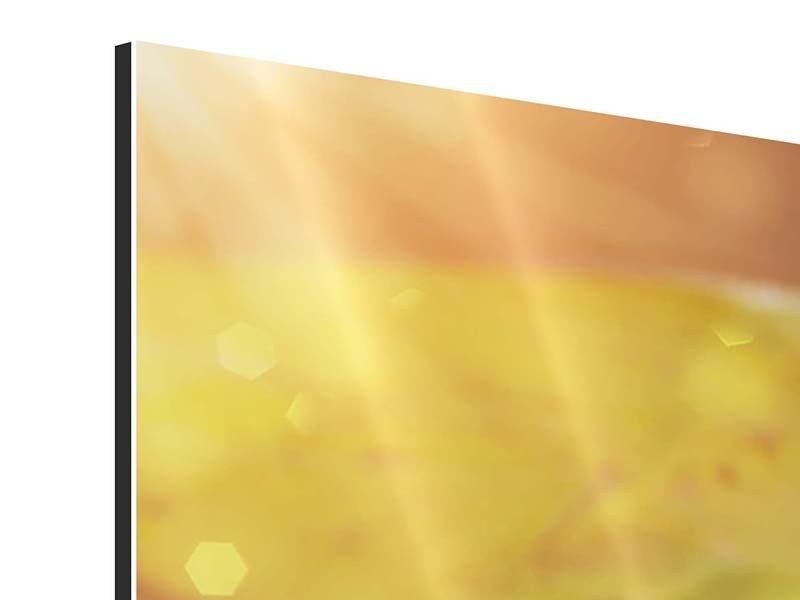 Aluminiumbild 4-teilig Seerose