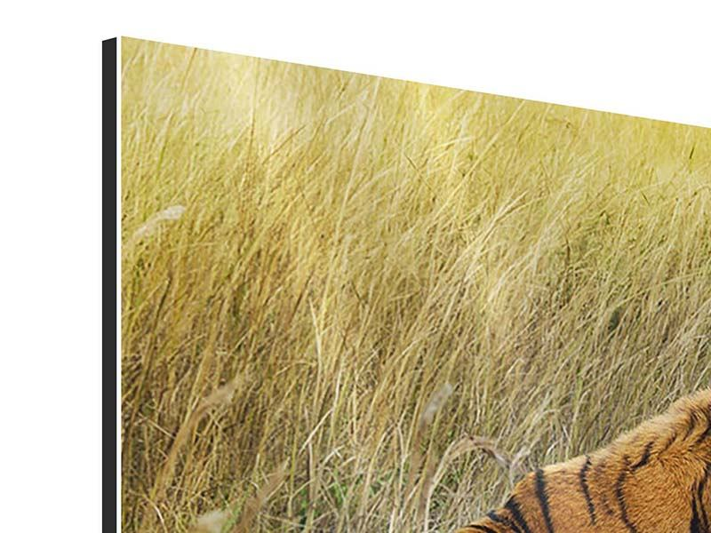 Aluminiumbild 4-teilig Der Tiger