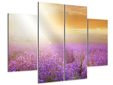 Aluminiumbild 4-teilig Sonnenuntergang beim Lavendelfeld