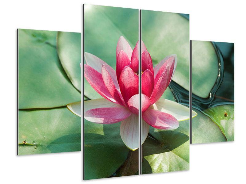 Aluminiumbild 4-teilig Der Frosch und das Lotusblatt