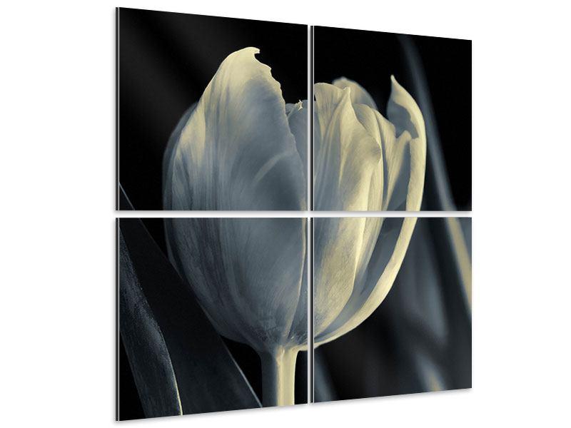 Aluminiumbild 4-teilig Schwarzweissfotografie XXL Tulpe