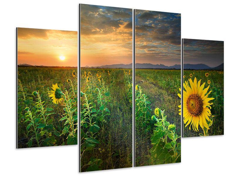 Aluminiumbild 4-teilig Sonnenblumenfeld im Abendrot