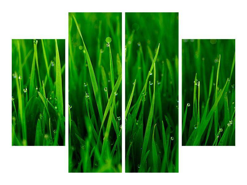 Aluminiumbild 4-teilig Gras mit Morgentau