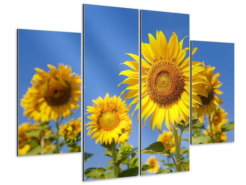 Aluminiumbild 4-teilig Himmlische Sonnenblumen
