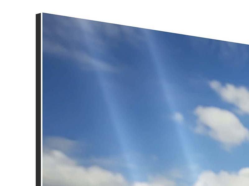 Aluminiumbild 4-teilig Sommer-Sonnenblumen