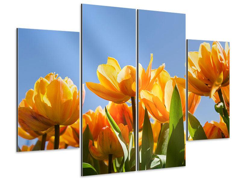 Aluminiumbild 4-teilig Märchenhafte Tulpen
