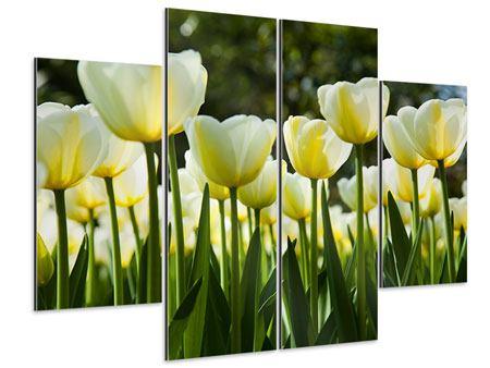 Aluminiumbild 4-teilig Tulpen bei Sonnenuntergang