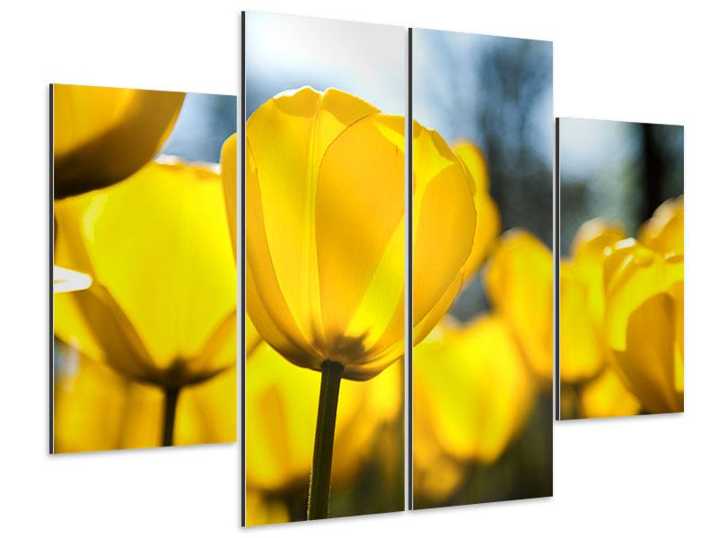 Aluminiumbild 4-teilig Gelbe Tulpen in XXL